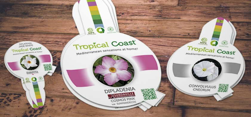 Diferentes etiquetas de Tropical Coast | CQPlants