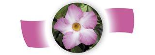Imagen de flor de las plantas Tropical Coast