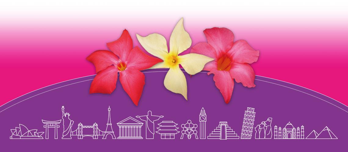 Flores Fushion Mandeville